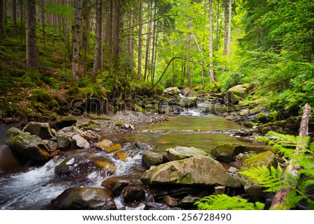 The mountain river in the Carpathians, Ukraine  - stock photo