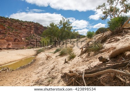 The Murchison River gorge riverbed with tumblagooda red and white banded sandstone and plants in the Kalbarri National Park in Western Australia/River Gorge Landscape/Kalbarri National Park