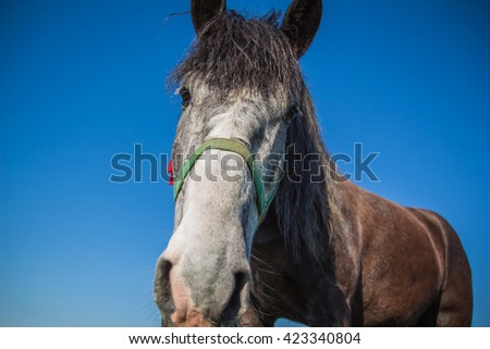 The muzzle is brown horse close-up on a background of blue sky - stock photo