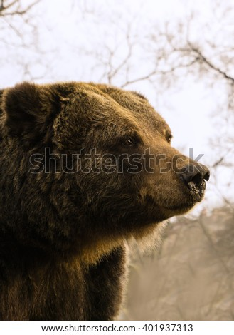 The muzzle of the bear.