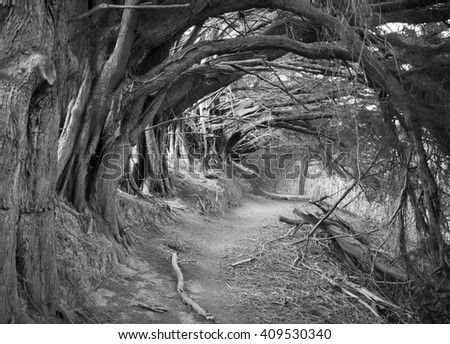 The mystic looking path called Hollow Alley outside Akaroa's resort town (New Zealand). - stock photo