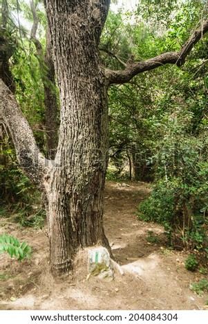 The Nahal Ahuza (Ahuza Stream) trail, on the western slope of the Carmel Mountain is a small natural spot in the urban area of the city of Haifa, Israel