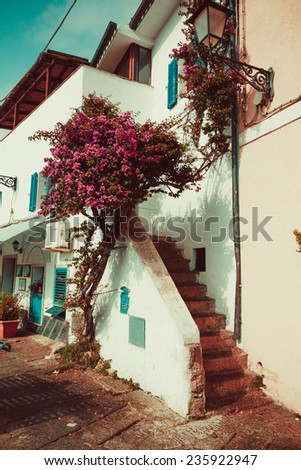 the narrow streets of the town and staircase in old house and flowers Oleander in Italy, Sardinia
