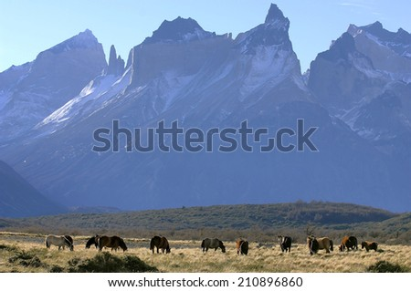 The National Park Torres del Paine with Horns of Paine and wild hoses, Patagonia, Chile,  - stock photo