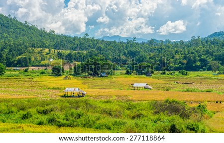 The natural landscape view of paddy field with local people do paddy farming - stock photo