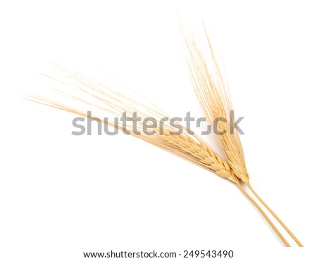 The natural rye wheat on white - stock photo