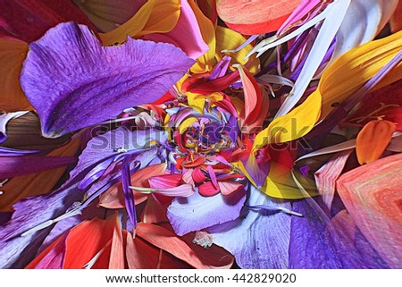 The natural texture of multicolored flower petals, colorful - stock photo