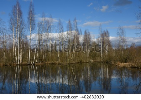 The nature of spring in the forest. Reflection of trees in water. The lake and the birch grove in early spring #10 - stock photo