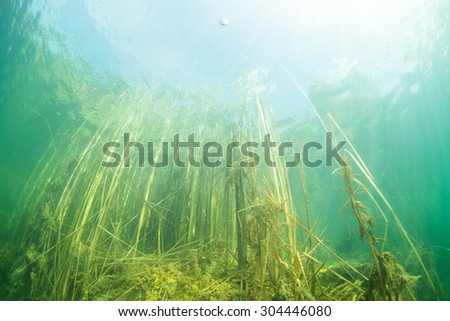 The nature of the bottom of the Ukrainian River - stock photo