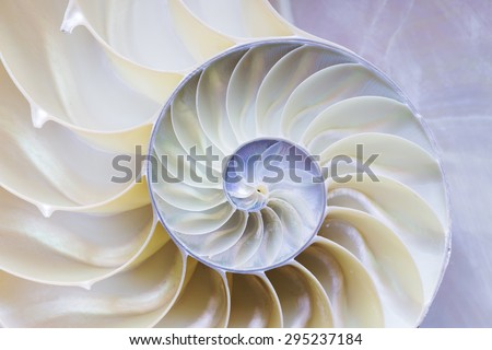 the nautilus shell section - stock photo