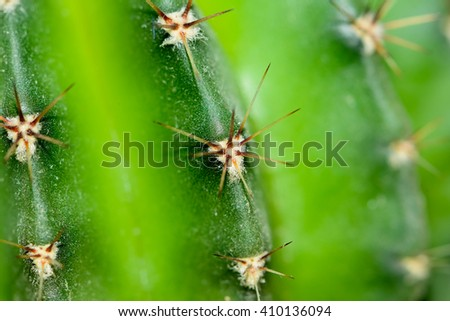 the needles of the cactus