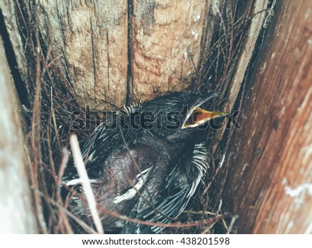 the nest of thrush with small babies and tree and blur background - stock photo