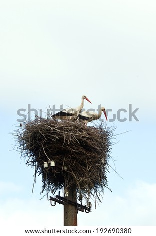 the nest with a couple of storks