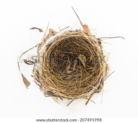 The nests on white background for decorate project.