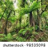 The New Zealand native bush. Fern tree - stock photo