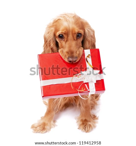 The nice dog is holding a present with the bow - stock photo