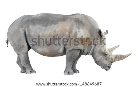 The Northern White Rhinoceros, or Northern Square-lipped Rhinoceros (Ceratotherium simum cottoni) isolated on white background.