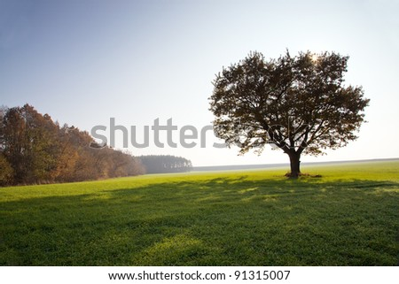The oak growing in an agricultural field (on a back background the sun, a shade from a tree) - stock photo