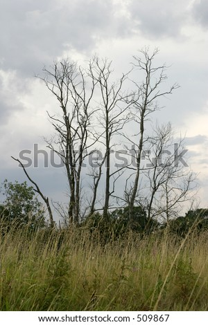 The old and dried up trees