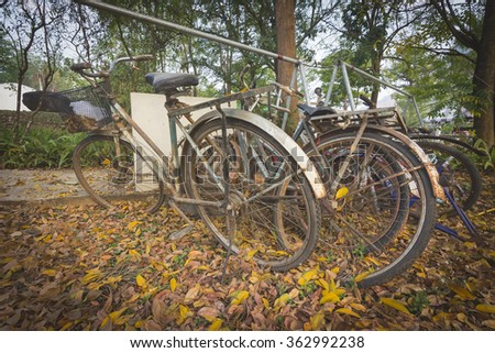The Old Bike in the garden vintage style,soft tone