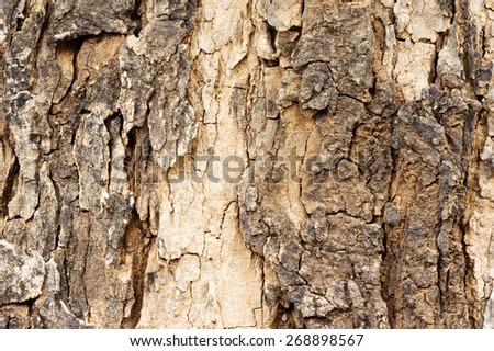 The old hard brown wood background texture