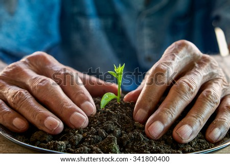The old man hand holding Seedling, for care and Seeding,new life concept. - stock photo