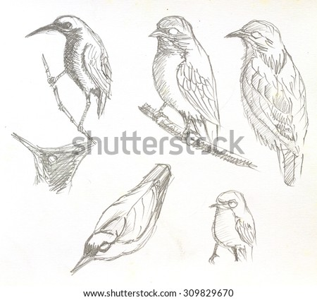 The original drawing of birds on white paper,
