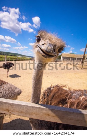 The ostrich head on blue clouds sky. - stock photo