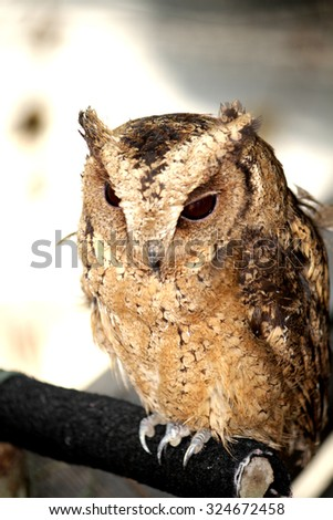 The owl close-up - stock photo