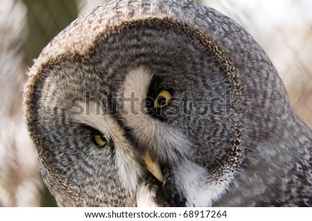 Owl Symbol Wisdom Stock Photo 68917264 Shutterstock