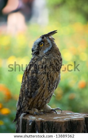 The owl sits on a stub and looks aside