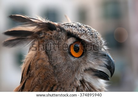The own who is looking out for prey. - stock photo