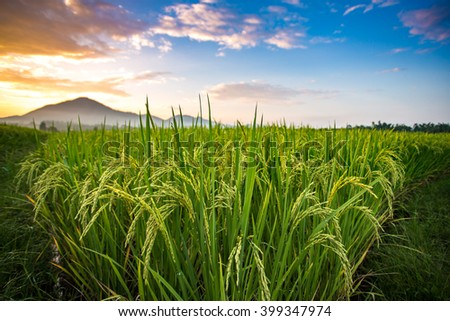 The paddy fields sunset at Phrao, Chiang Mai, Thailand. - stock photo