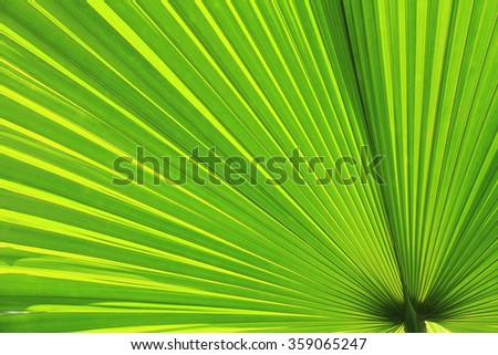 The palm leaf with light shining behind.