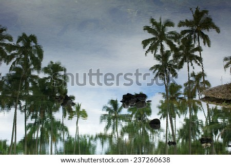The palm tree reflection in the water in Hawaii - stock photo