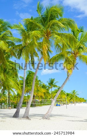 The palms of Smathers Beach - stock photo