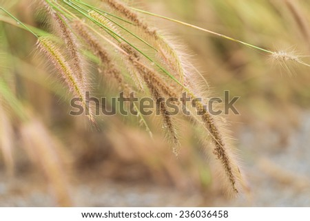 The pampas in morning light - stock photo