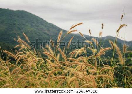 The pampas on the hill - stock photo