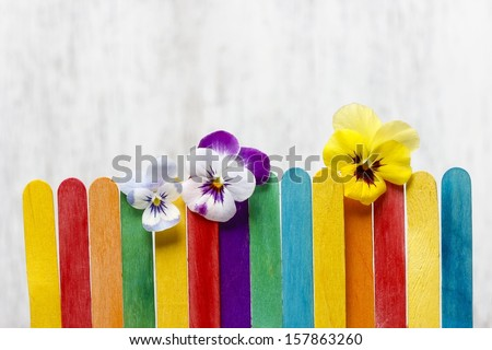 The pansy flowers on colorful wooden fence. Copy space. - stock photo