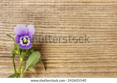 The pansy flowers on wooden background, copy space - stock photo