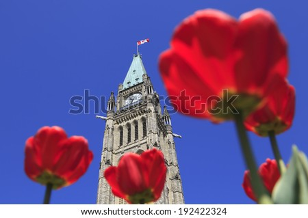 The Parliament of Canada and red tulip flower - stock photo