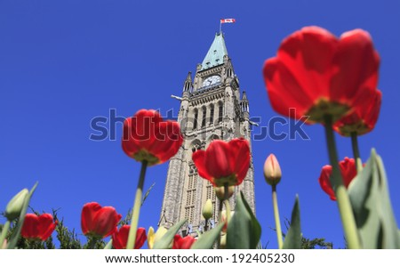 The Parliament of Canada surrounded by red tulips - stock photo
