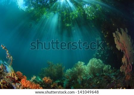 The Passage at Raja Ampat, West Papua, Indonesia - stock photo