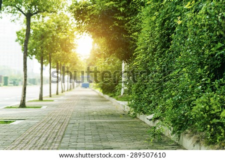 The Path along  trees - stock photo