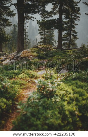 The path among the rocks in the foreground. Dawn in a mountain forest in the summer. Nature Park Ergaki. Sayan. Siberia - stock photo