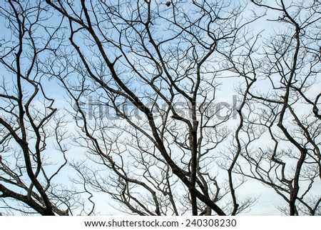 The pattern of dead tree - stock photo