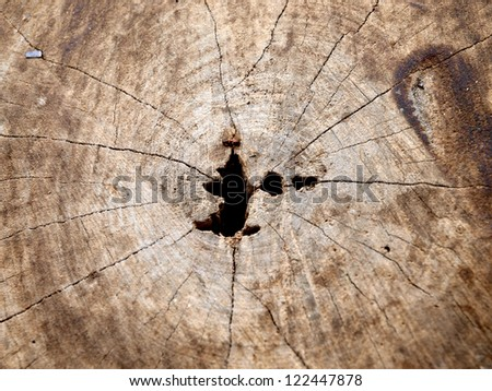 The pattern of log or tree trunk - stock photo