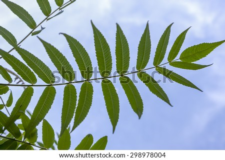 The pattern of the leaves of a plant with the sky in the background. - stock photo