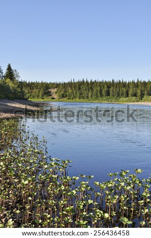 The pebble beach of the Ural river.Taiga river Pag, Russia, the Polar Urals. - stock photo