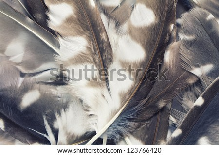 The pen feathers of Boreal Owl background close up. Old stye. - stock photo